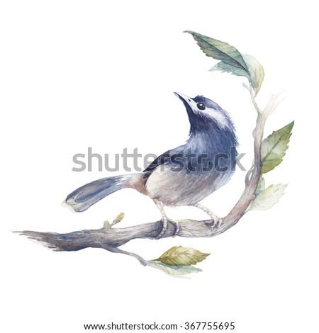 watercolor bird illustration....