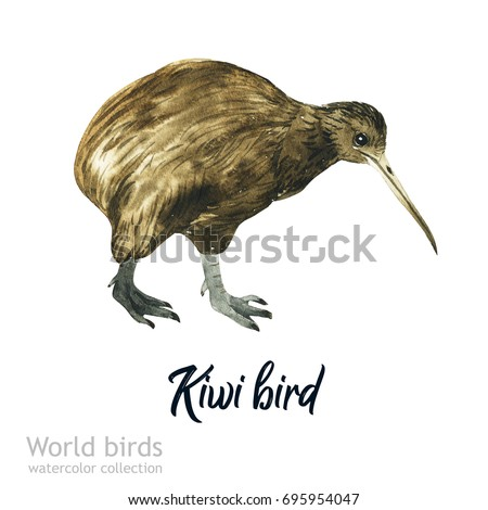 Watercolor bird of isolated illustration on a white background. Natural wildlife collection. Bird Kiwi. Australian fauna.