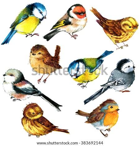 watercolor bird set. bird. cute ...