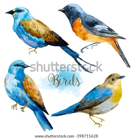 watercolor bird set of isolated ...