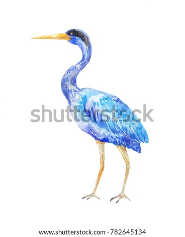 Watercolor blue heron. Illustration of a standing bird on a white background