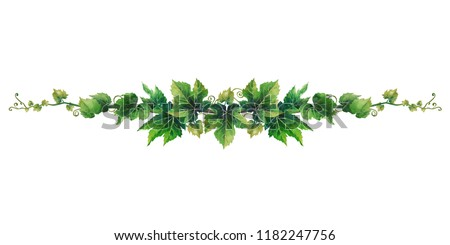 Watercolor branch with grape leaves and curly elements. Hand painted art isolated on white background