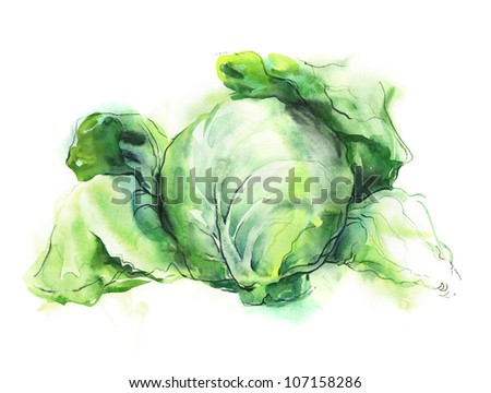 Watercolor -Cabbage-