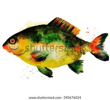 watercolor carp fish