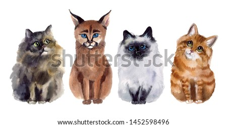Watercolor cats on the white background #1452598496