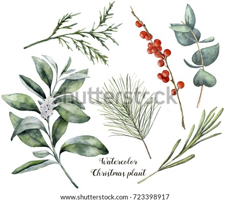 Watercolor Christmas plant and berries. Hand painted rosemary, eucalyptus, cedar, snowberry and fir branches isolated on white background. Floral botanical clip art for design or print