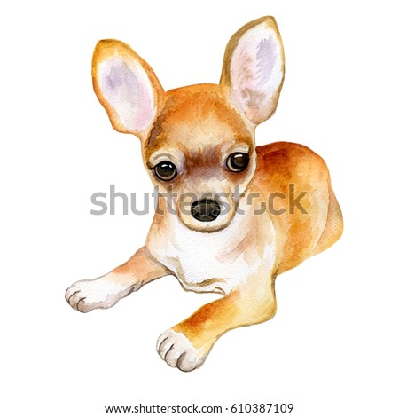 Watercolor closeup portrait of chihuahua dog isolated on white background. Funny dog sitting. Hand drawn sweet home pet. Popular toy. Greeting card design clip art illustration