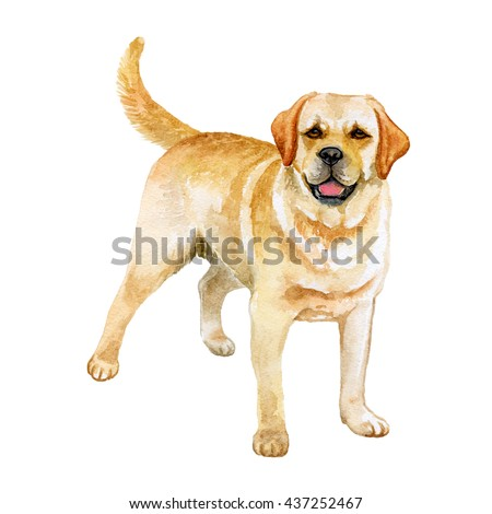 Watercolor closeup portrait of Golden Retriever breed dog isolated on white background. Large-sized  longhair gun dog in Scotland. Hand drawn sweet home pet. Greeting card design. Clip art