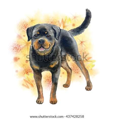 Watercolor closeup portrait of large Rottweiler breed dog isolated on abstract background. Large shorthair German working guardian dog. Hand drawn sweet home pet greeting birthday card design clip art