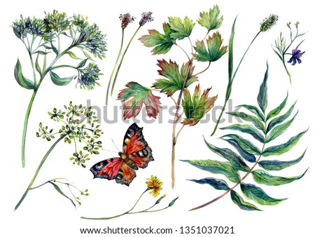 Watercolor Collection of Motley Grass and Wild Meadow Plants with Peacock Butterfly. Botanical Illustration in Vintage Style. Summer Greenery Nature Decoration Isolated on White.