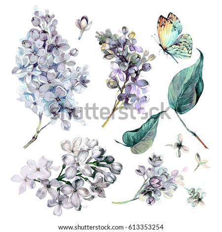 watercolor Collection of White Lilac Flowers, Leaves and Butterfly Isolated on White Background. Botanical Illustration in Vintage Style.