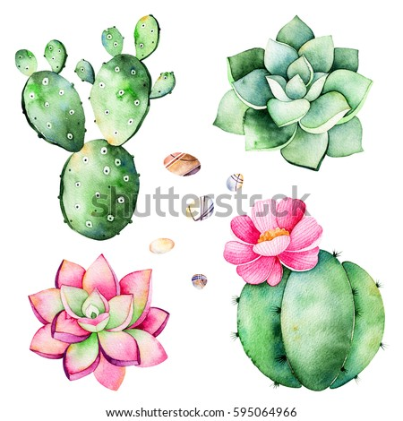 Watercolor collection with succulents plants,pebble stones,cactus.Handpainted iclipart isolated on white background.World of succulent and cactus collction.Perfect for your unique design,logo,patterns