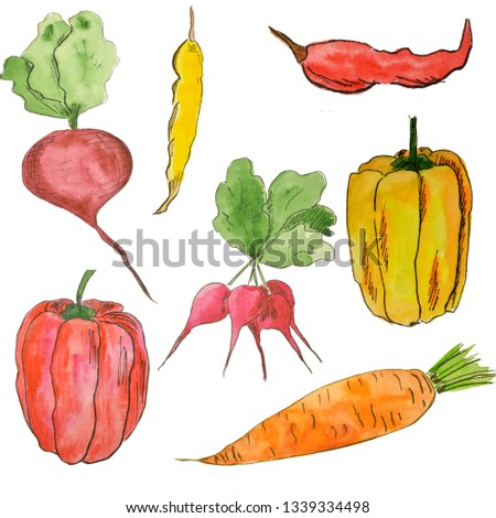 Watercolor colorful set of vegetables. Watercolor set of vegetables. Bright types of red pepper, carrot. Vegetarian food. Vegetarian food