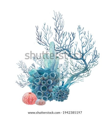 Watercolor coral illustration. Hand drawn isolated underwater branches, sea urchin composition on white background. Photo stock ©