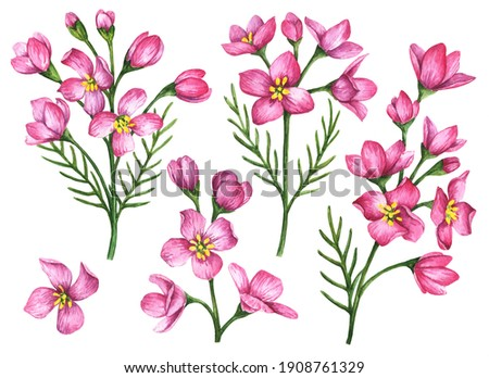 Watercolor cuckoo flowers set, hand drawn illustration, floral elements isolated on a white background.  Foto d'archivio ©