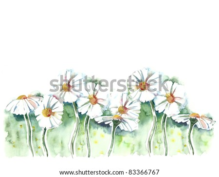 Watercolor –Daisies-
