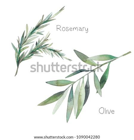 watercolor decorative herbs set....