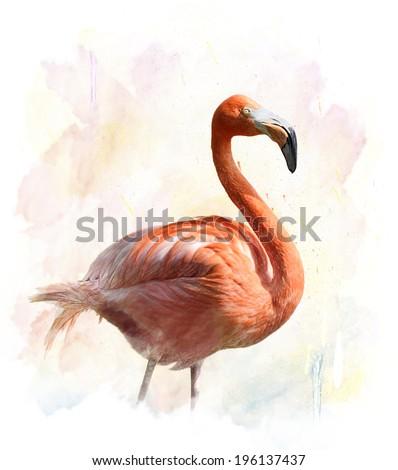 Watercolor Digital Painting Of Flamingo