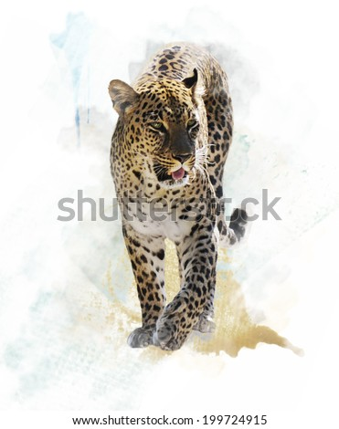 Stock Photo Watercolor Digital Painting Of  Leopard