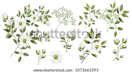 Watercolor drawing of a branch with leaves and flowers. Botanical illustration. Composition of white flowers, colorful leaves, wild herbs. A set of bouquets, twigs, flower elements and garden herbs.