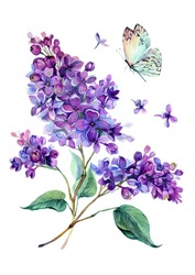 Watercolor drawing of beautiful lilac bouquet and white butterfly. Hand drawn botanical illustration of syringa vulgaris. Watercolor vintage summer blooming bouquet of purple flowers.
