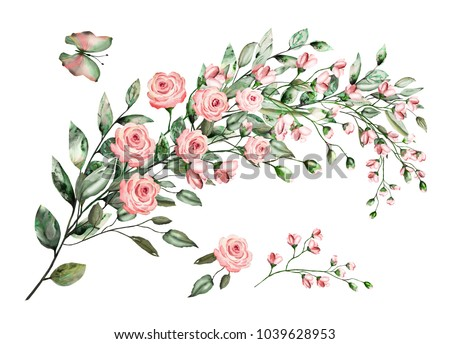 watercolor drawing of twig with leaves and flowers. Botanical illustration .Composition of pink roses and wild herbs.