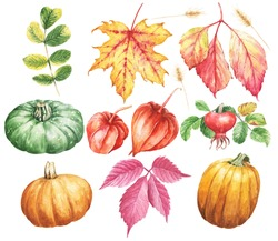 Watercolor fall season botanical illustration, pumpkins, dog rose, maple leaf and winter cherry. Watercolour floral set isolated on white background.