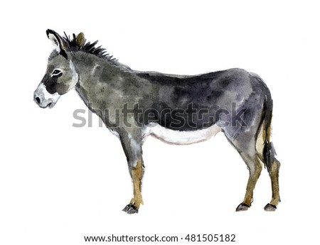 Watercolor farm animals. Donkey hand drawn Illustration isolated on white background.  Farm animals sketch. Funny animal watercolor sketch print