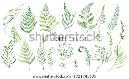 Watercolor Fern Clipart, Isolated Greenery clipart for wedding invitation, baby shower, birthday cards diy,  Nature clip art with forest greenery.
