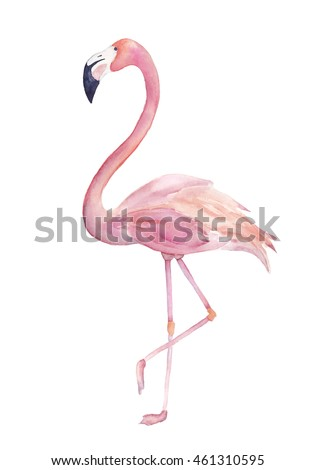 Watercolor flamingo. Isolated exotic bird on white background. For cards, textile, t-shirts
