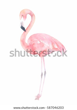 Watercolor flamingo. Painted image
