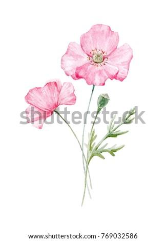 Watercolor Floral Botanical Illustration Pink Poppy Flower Greeting
