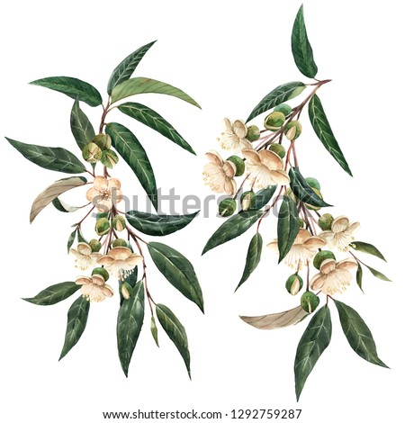 Watercolor floral set. isolated flowers and leaves fruit durian