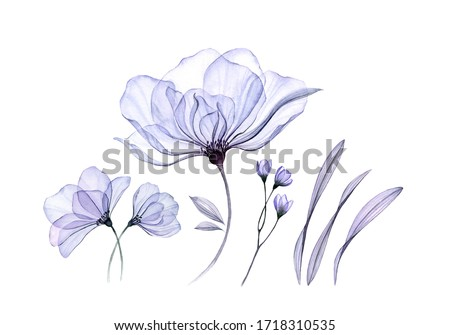 Watercolor floral set isolated on white. Transparent rose collection of big flowers, leaves, branches in pastel blue. Botanical illustration for wedding design, greeting cards Foto stock ©