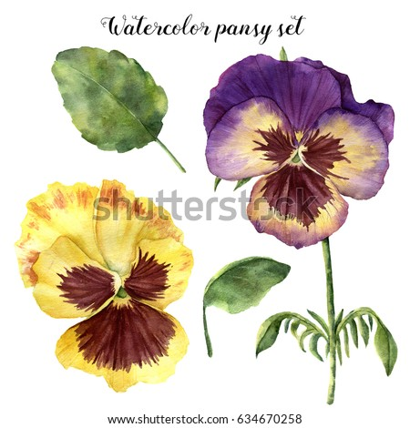 Stock Photo Watercolor floral set with pansy. Hand painted illustration with leaves, viola flowers and branches isolated on white background. For design, print and fabric.