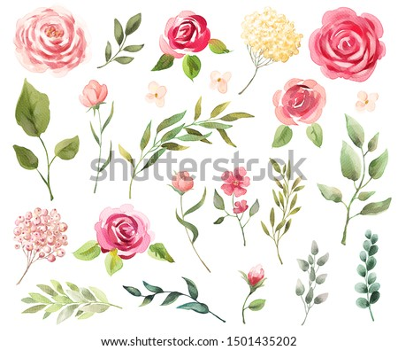 Watercolor flowers, leaves. Set isolated on white background