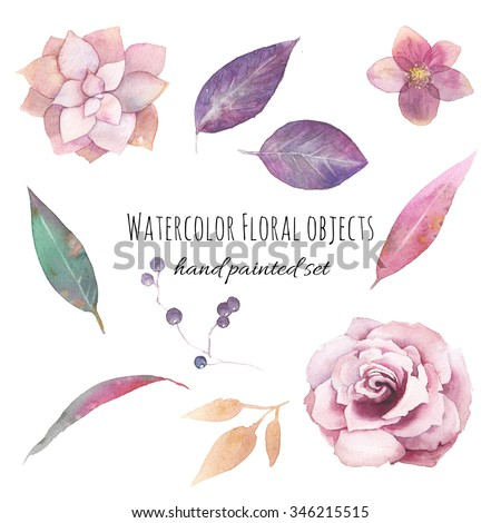 Watercolor flowers set. Hand painted purple leaves, pink flowers: rose, hellebore, succulent, wild berries branch isolated on white background. Floral artistic collection