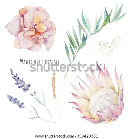 Watercolor flowers set hand painted purple leaves pink flowers watercolor flowers set hand painted purple leaves pink flowers rose lavender mightylinksfo