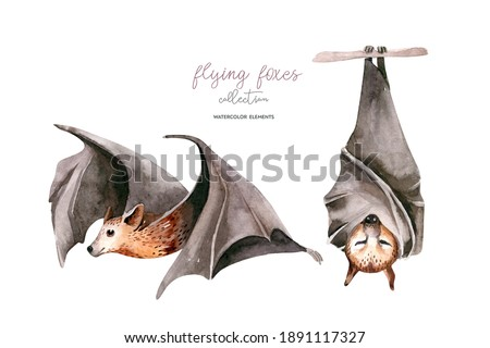 Watercolor flyinf fox. Sleeping black fruit bat hanging on on tree branch and flying bar. Nursery illustration. White background. ストックフォト ©