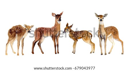 Watercolor Four Fawns Baby Deer Hand Painted Fawn Illustration isolated on white background. Wildlife art illustration. Watercolor graphic for fabric, postcard, greeting card, book, poster, tee-shirt