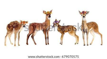 Watercolor Four Fawns Baby Deer Hand Painted Fawn Illustration isolated on white background. Wildlife art illustration.Watercolor graphic for fabric, postcard, greeting card, book, poster, tee-shirt