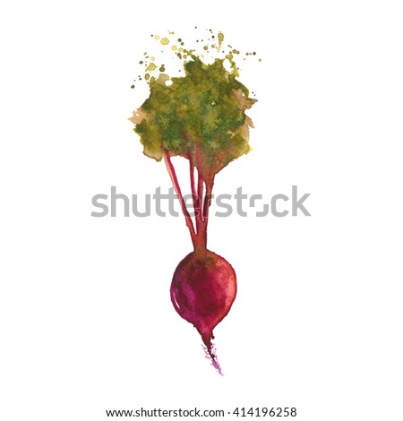 Watercolor fresh beet isolated on white background. Hand drawn watercolor veggie beet vector with splashes. Fresh Veggies. Beetroot illustration.  Watercolour beet.