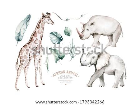 Watercolor frican elephant animal, giraffe andrhinoceros isolated on white background. Savannah rhipo wildlife cartoon zoo safari poster. Jungle decoration.