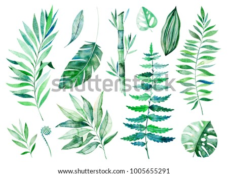 Watercolor greens collection.Texture with greens,branch,leaves,tropical leaves,bamboo.Perfect for wedding,invitations,greeting cards,quotes,pattern,bouquet,logos,Birthday cards,your unique create etc