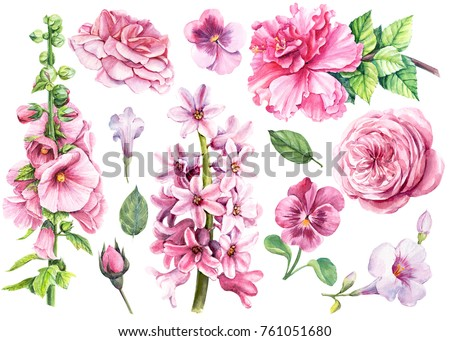 Watercolor hand drawing, elegant flowers for invitation, holiday postcard, greeting card, poster. Set of flora pink rose, hibiscus, pansies, hyacinth, mallow clipart
