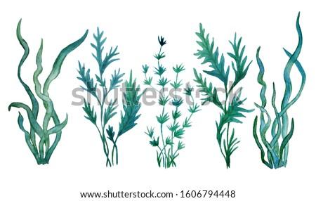 watercolor hand drawn illustration set with green blue water seaweed algae. Marine environment for cosmetics super food labels design packaging paper kelp laminaria spirulina healthy organic eating