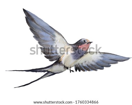 Watercolor hand drawn illustration with isolated flying swallow. Animalistic character for natural design. Object for greeting card, post card, wallpaper, textile template. Freedom and good sign image Foto stock ©