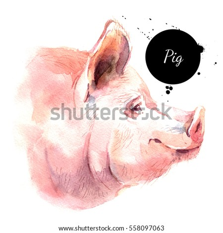 Watercolor hand drawn pig head illustration. Painted sketch isolated on white background
