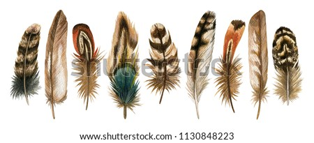 Watercolor hand drawn set of brown bird feathers. Colorful boho collection isolated on white background