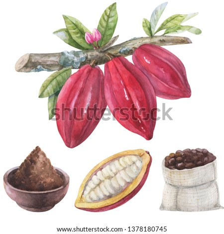 Watercolor hand painted chocolate elements. Set cocoa beans on a branch with flowers, leves, cocoa powder, half cocoa fruit, bag of cocoa beans isolated on white for design
